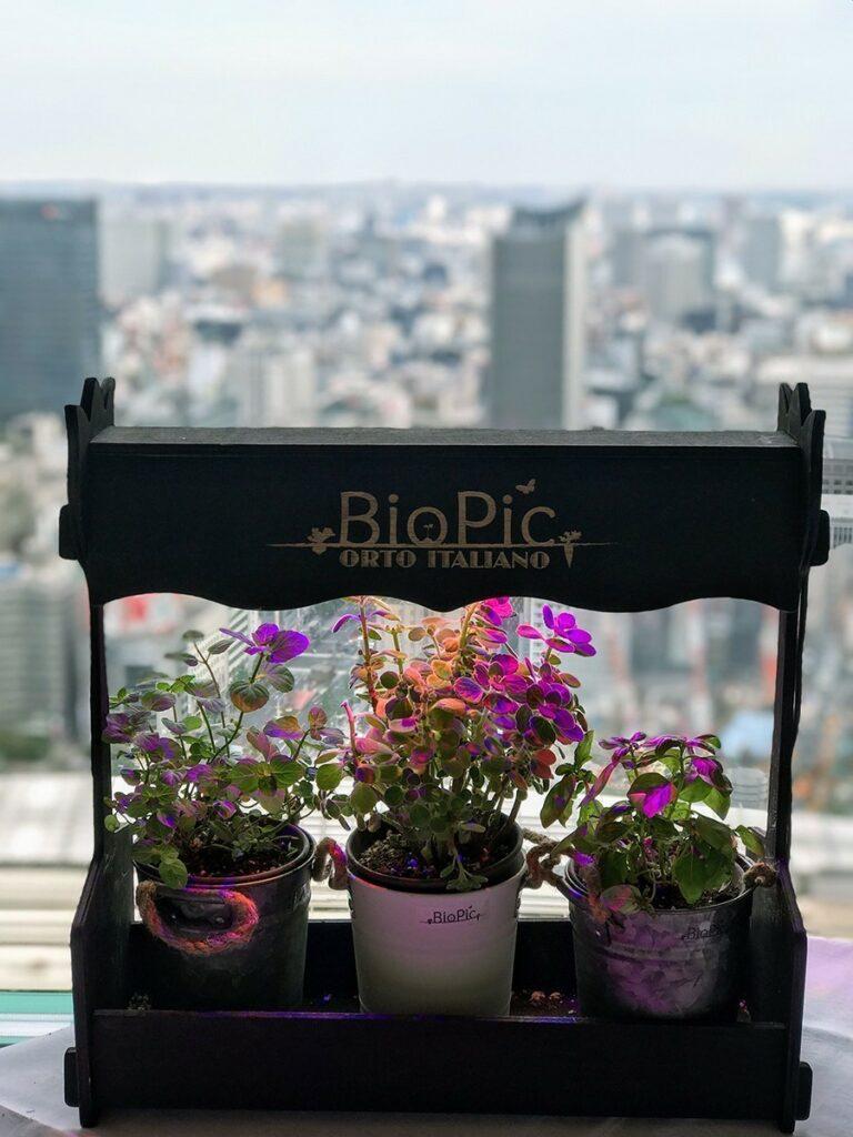 "BioPic ""OrtoGourmet"" in Tokyo's top italian restaurant  ""Antica Osteria del Ponte""."